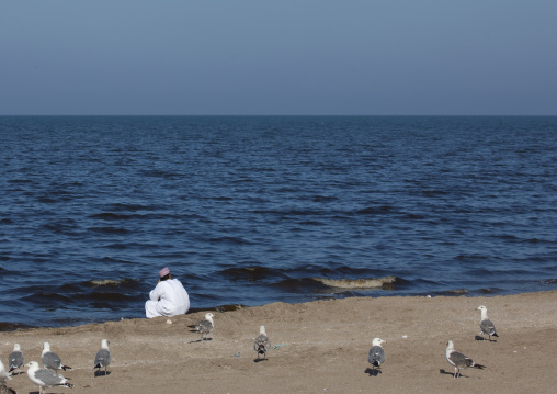 Back Of An Arabic Man Looking At Red Tide In Oman Sea Sitting Beside The Sea With Seagulls Around, Muscat, Oman