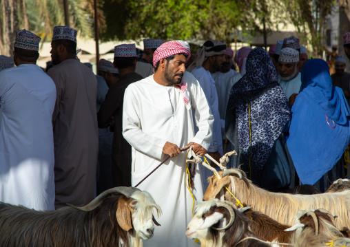 Omani man using his mobile phone while selling goats in the market, Ad Dakhiliyah Region, Nizwa, Oman
