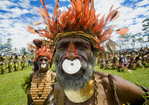 Highlander warrior with a nose ring decoration during a sing sing ceremony, Western Highlands Province, Mount Hagen, Papua New Guinea