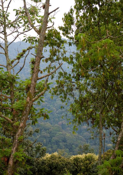 Uwinka canopee forest - rwanda