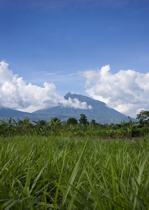 Volcanoes national park area - rwanda