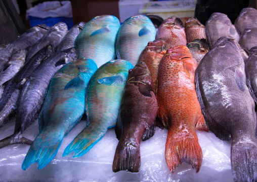Colorful fishes in the fish market, Mecca province, Jeddah, Saudi Arabia