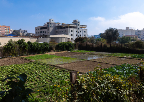 Gardens in the city center, Asir province, Abha, Saudi Arabia