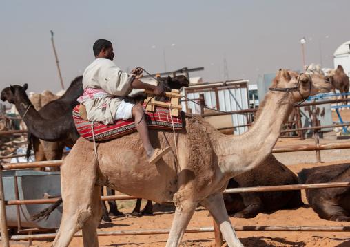 Rashaida sudanese man riding a camel in the market, Riyadh Province, Riyadh, Saudi Arabia