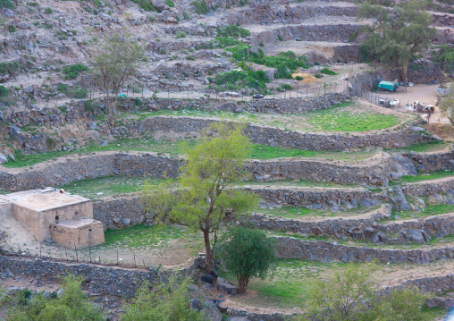 Terraces in the mountain, Al-Sarawat, Fifa Mountains, Saudi Arabia