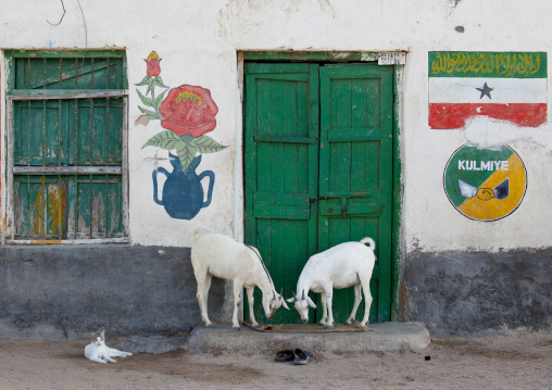 Kulmiye political party sign painted onto the wall around a green door, Two goats grazing nearby,  Berbera, Somaliland
