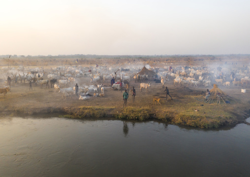 Long horns cows in a Mundari tribe camp on the banks of river Nile, Central Equatoria, Terekeka, South Sudan