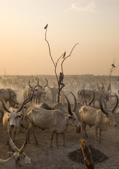 A Mundari tribe boy standing on a wood mast to watch his cows, Central Equatoria, Terekeka, South Sudan