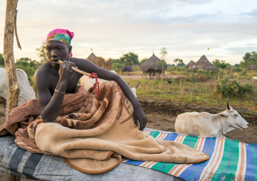 Mundari tribe man using a wooden toothbrush on a bed in the middle of his cows, Central Equatoria, Terekeka, South Sudan