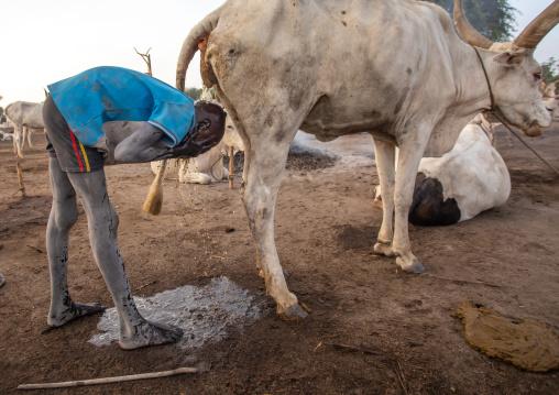 Mundari tribe boy showering in the cow urine to dye his hair in orange, Central Equatoria, Terekeka, South Sudan