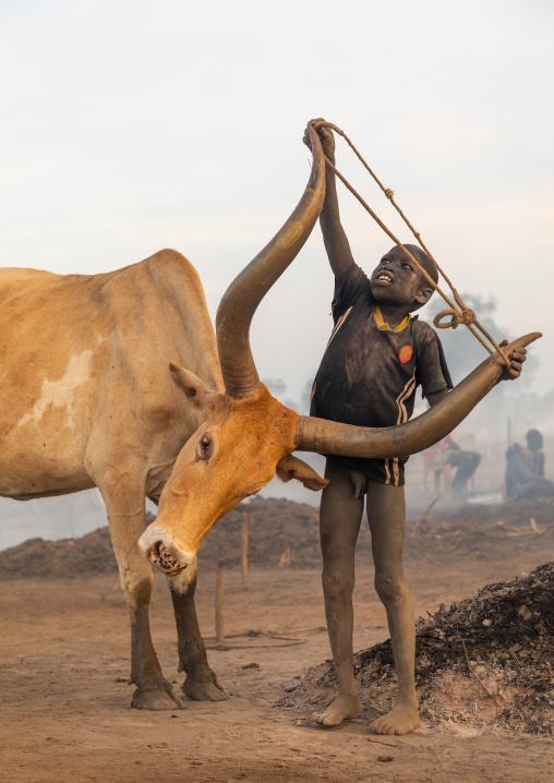 Mundari tribe boy putting a rope around the horns of a cow, Central Equatoria, Terekeka, South Sudan