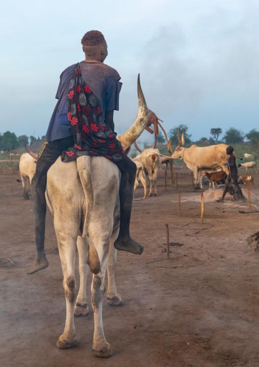Mundari tribe man riding a long horns cow, Central Equatoria, Terekeka, South Sudan