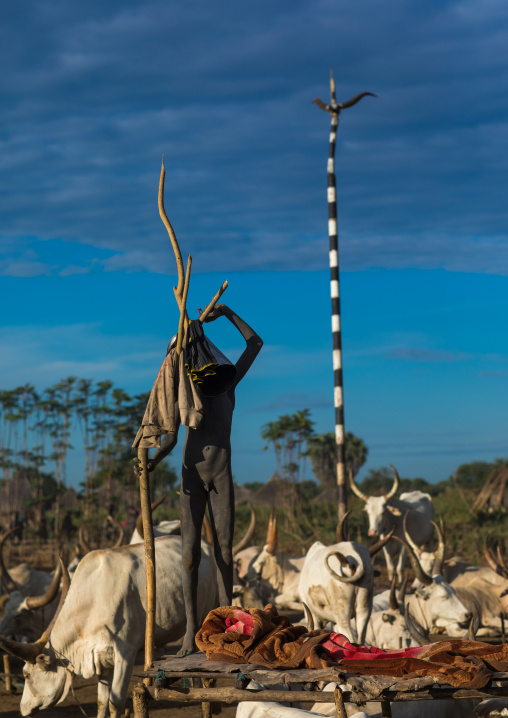 Mundari tribe boy standing on a wooden bed in the middle of his long horns cows, Central Equatoria, Terekeka, South Sudan