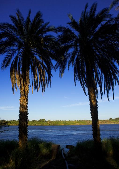 Sudan, Nubia, Soleb, palm trees on nile river banks