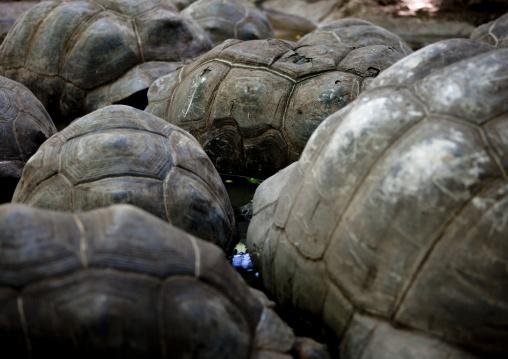 Prison island giant turtle, Zanzibar, Tanzania
