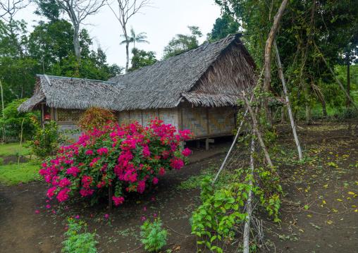 Traditional house and its garden, Malampa Province, Malekula Island, Vanuatu