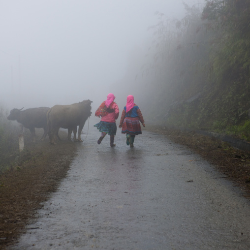 Flower hmong girls back from the fields, Sapa, Vietnam