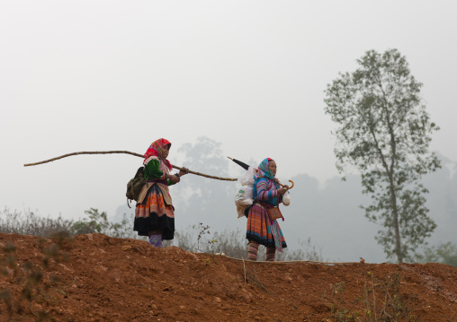 Veiled flower hmong women on their way to sapa market, Vietnam
