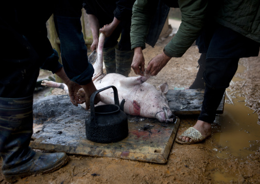 Black hmong men killing a pig, Sapa, Vietnam
