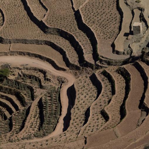 Terrace Cultivation, Kholan, Yemen