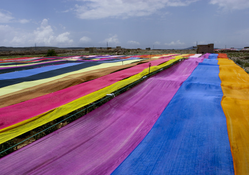 Qat Field Covered With Colorful Gauzes, Ibb, Yemen