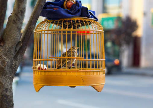 Bird in a cage in the street, Gansu province, Linxia, China