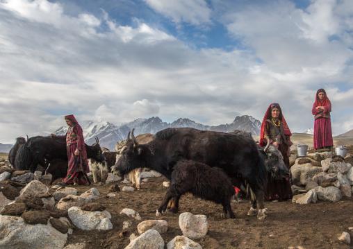 Wakhi nomad women milking yaks, Big pamir, Wakhan, Afghanistan