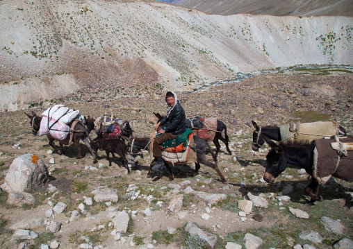 Donkeys convoy in the pamir mountains, Big pamir, Wakhan, Afghanistan