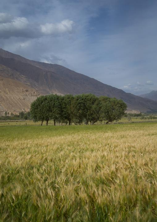 Farm field, Badakhshan province, Qazi deh, Afghanistan