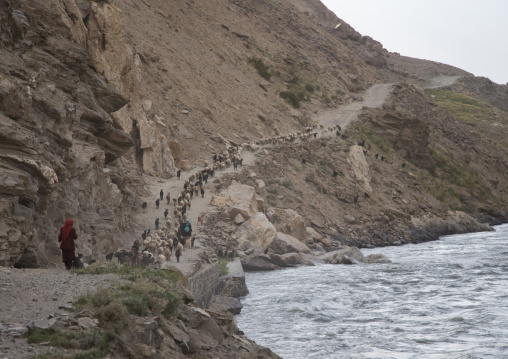 Sheeps and goats on a narrow mountain road, Badakhshan province, Qazi deh, Afghanistan