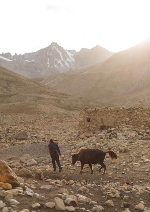 Wakhi man with his yak, Big pamir, Wakhan, Afghanistan