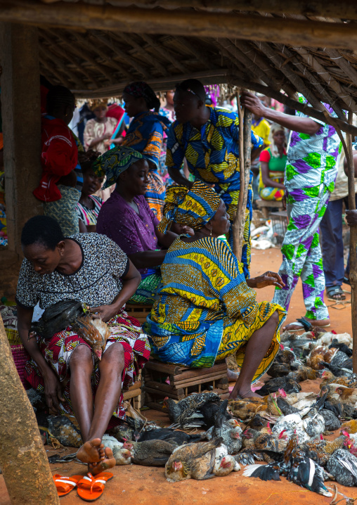 Benin, West Africa, Adjara, women selling chickens in a market