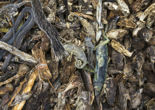 Benin, West Africa, Bonhicon, a voodoo market with many snakes and chameleons