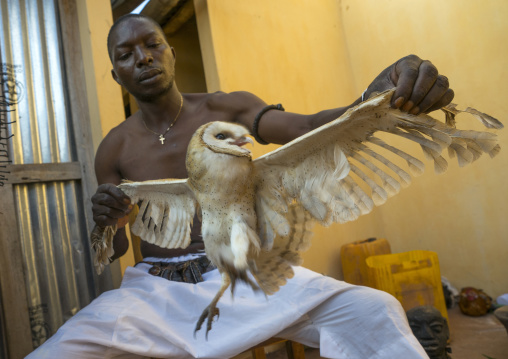 Benin, West Africa, Bonhicon, kagbanon bebe voodoo priest during a ceremony with a owl