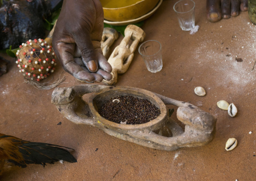 Benin, West Africa, Bonhicon, kagbanon bebe voodoo priest using some pepper during a ceremony
