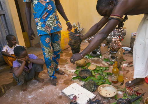 Benin, West Africa, Bonhicon, the slaughter of a pigeon in a ritual sacrifice during a voodoo ceremony runned by kagbanon bebe priest