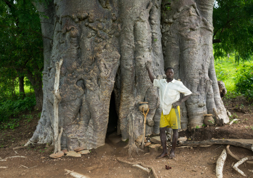 Togo, West Africa, Nadoba, tamberma somba tribe man standing in front of an old baobab where people used to live inside the empty trunk long time ago