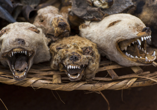 Benin, West Africa, Bonhicon, dogs and hyenas heads sold on a voodoo market