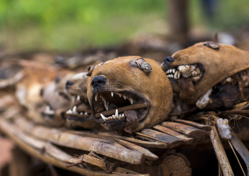 Benin, West Africa, Bonhicon, dogs heads sold on a voodoo market