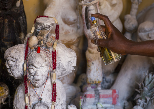 Benin, West Africa, Bonhicon, kagbanon bebe voodoo priest putting some perfume on the sacred statues during a ceremony