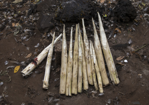 Benin, West Africa, Dankoly, wood sticks used to ask favors to the spirits on a voodoo shrine