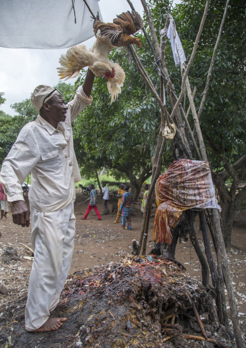 Benin, West Africa, Dankoly, the slaughter of a chicken in a ritual sacrifice during a voodoo ceremony