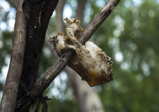 Benin, West Africa, Dankoly, animal head skull on a voodoo shrine