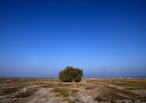 Lonely Tree, Lake Abbe, Djibouti