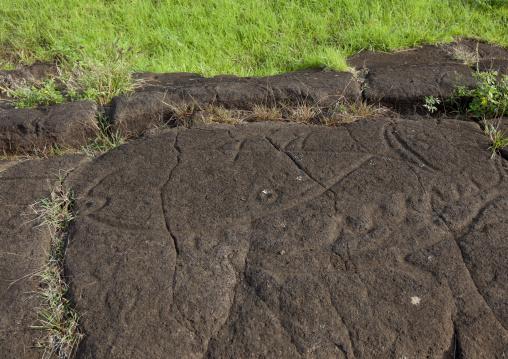 Tuna Petroglyph In Paka Vaka Rock Art Site, Easter Island, Chile