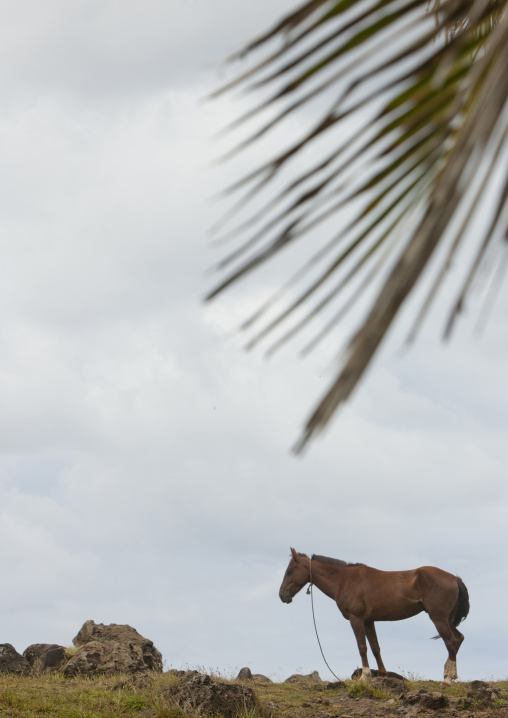 Horse In Easter Island, Chile
