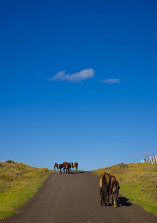 Horses On A Road, Easter Island, Chile
