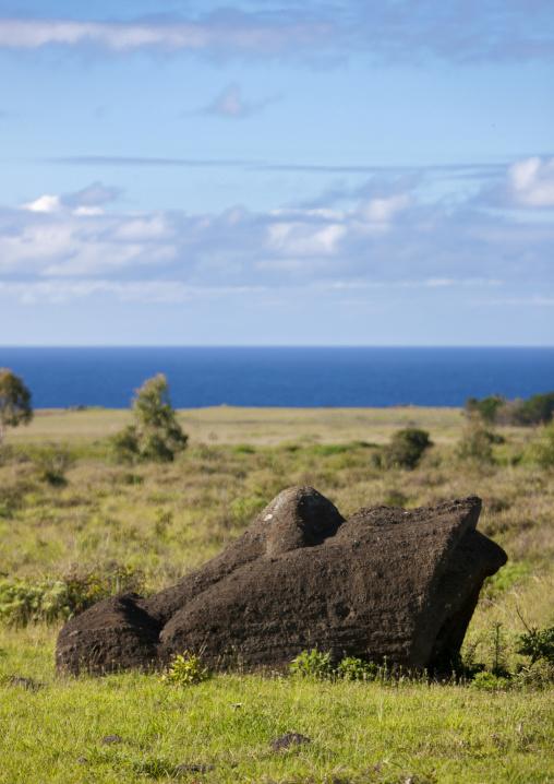Moai Head Lying On The Ground In Rano Raraku, Easter Island, Chile