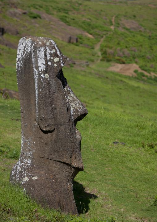 Moai In Rano Raraku, Easter Island, Chile