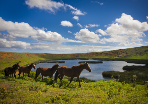 Horses In Front Of The Crater Of Rano Raraku, Easter Island, Chile